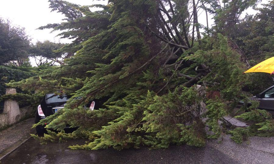 aaa albero via cattolica risultato