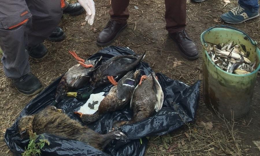 Sversamento, divieto di caccia e pesca