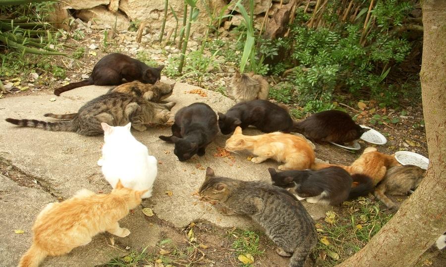 Sterilizzazione gratuita per i gatti randagi