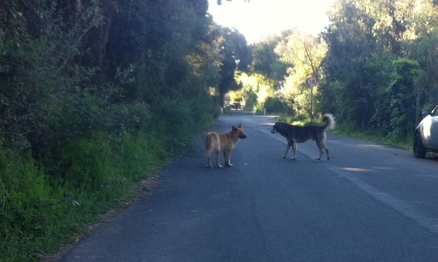Randagi o padronali, i cani si portano al guinzaglio