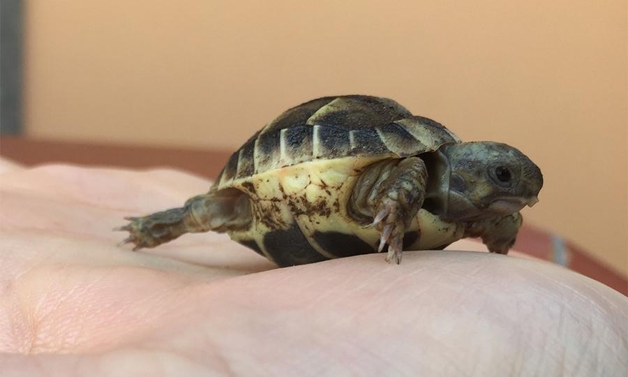 Conoscere le tartarughe in Oasi il 6 settembre