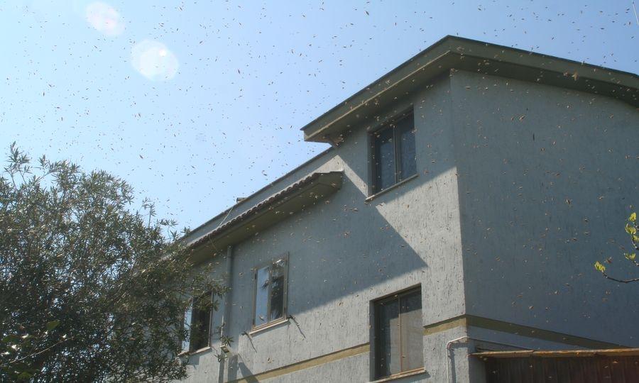 Il primo sciame d'api dell'anno
