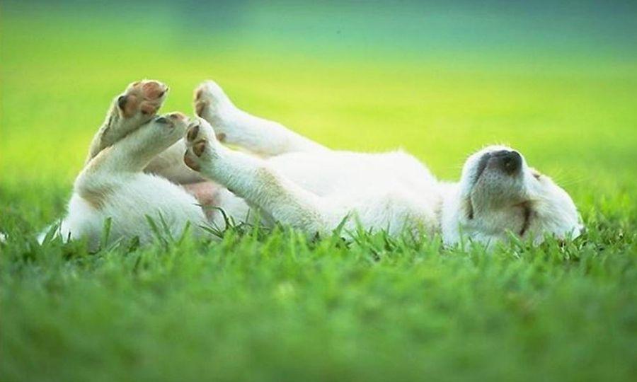 Adozioni cani, sì questionario