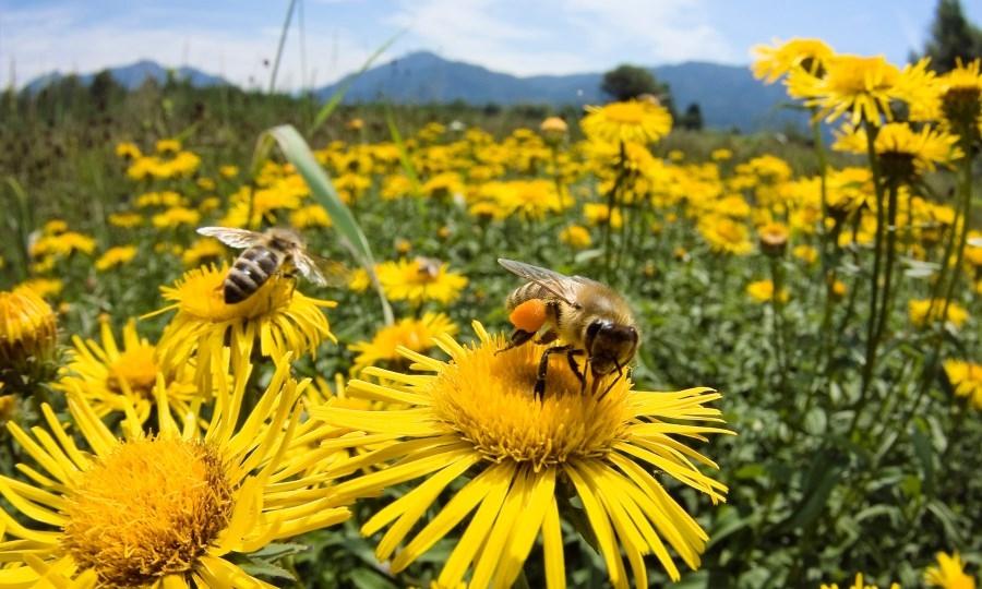 Il mondo delle api, visita il 4 ottobre