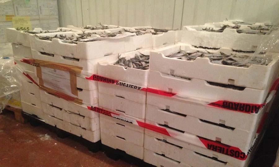 Sequestrate 1,5 tonnellate di pesce congelato