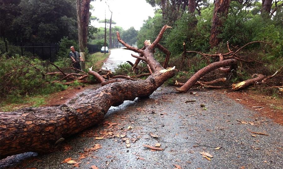 Maltempo, cade pino su via Portovenere