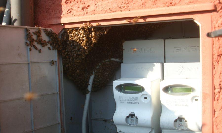 Le api elettriciste
