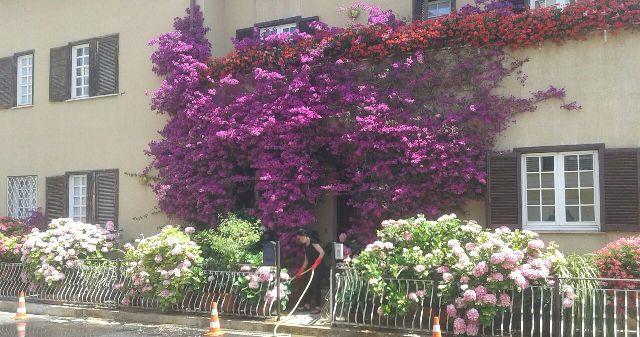 Casa fiori 1 k