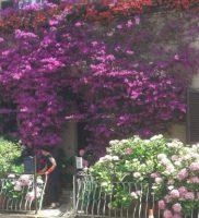 Casa fiori 2k