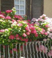Casa fiori 3 k
