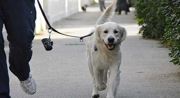 Deiezioni canine