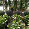 Flora e Fauna (3)