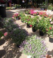 Flora e Fauna (4)