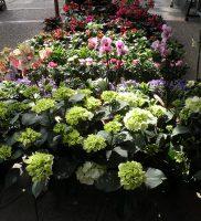 Flora e Fauna (8)