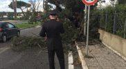 Leccio carabinieri k