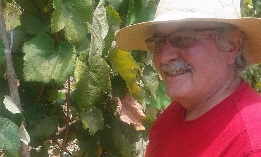 Vidor e l'uva ai tropici