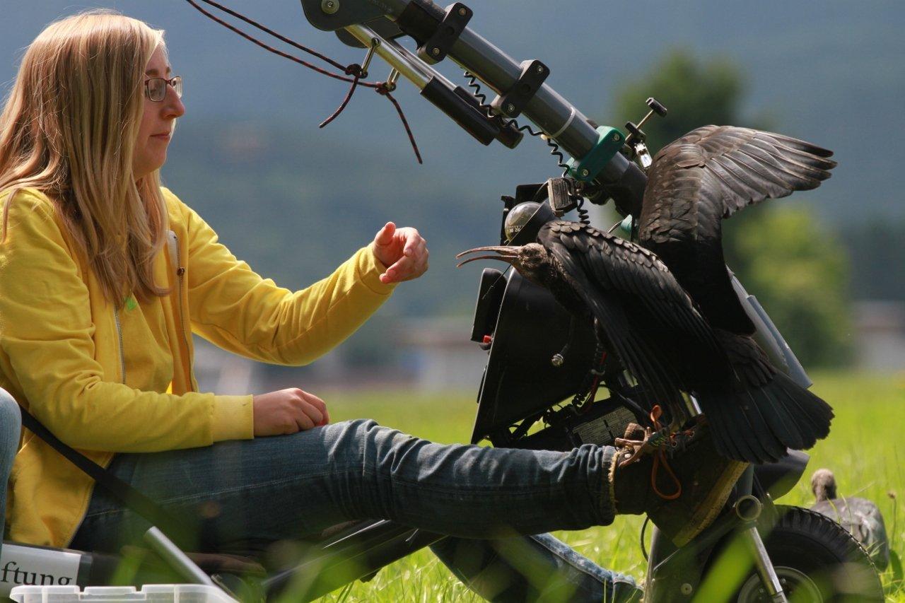 anne gabriela ibis