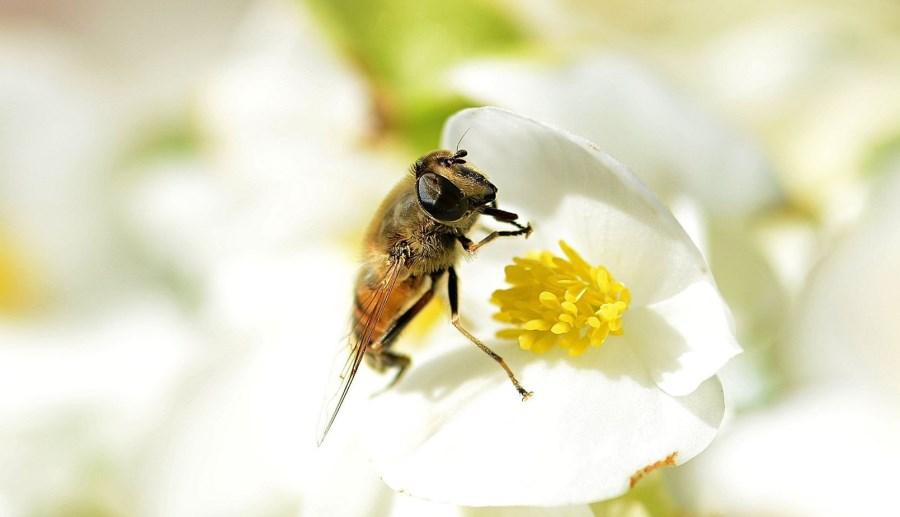 ape fiore web