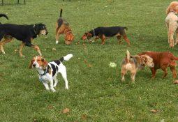 Aree cani, la loro tutela non siano solo parole