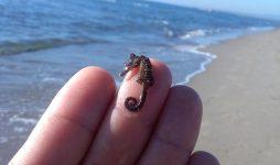 Quel piccolo cavalluccio marino