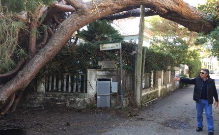 Via Rapallo, crolla un altro pino