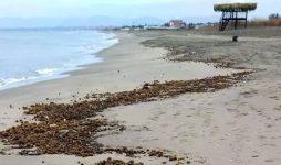 Spiaggia plastic free grazie ai pescatori