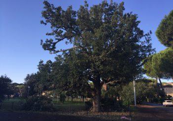 Parco giochi, potata la quercia e tagliati alberi secchi