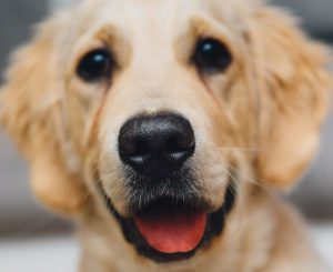 Microchip e registrazione anagrafe canina il 29 aprile al Miraggio