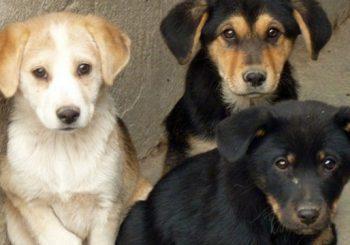Adozione animali, nuovo protocollo d'intesa comunale