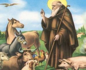 S. Antonio Abate, benedizione degli animali il 17