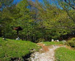 Yogarmonia, escursione sul sentiero Coleman il 27 maggio
