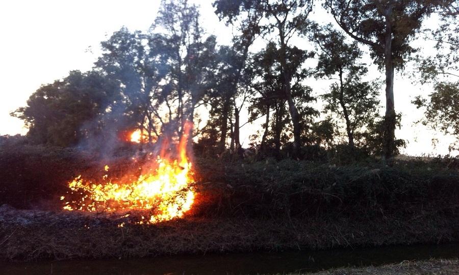 Incendio lambisce le Vasche di Maccarese