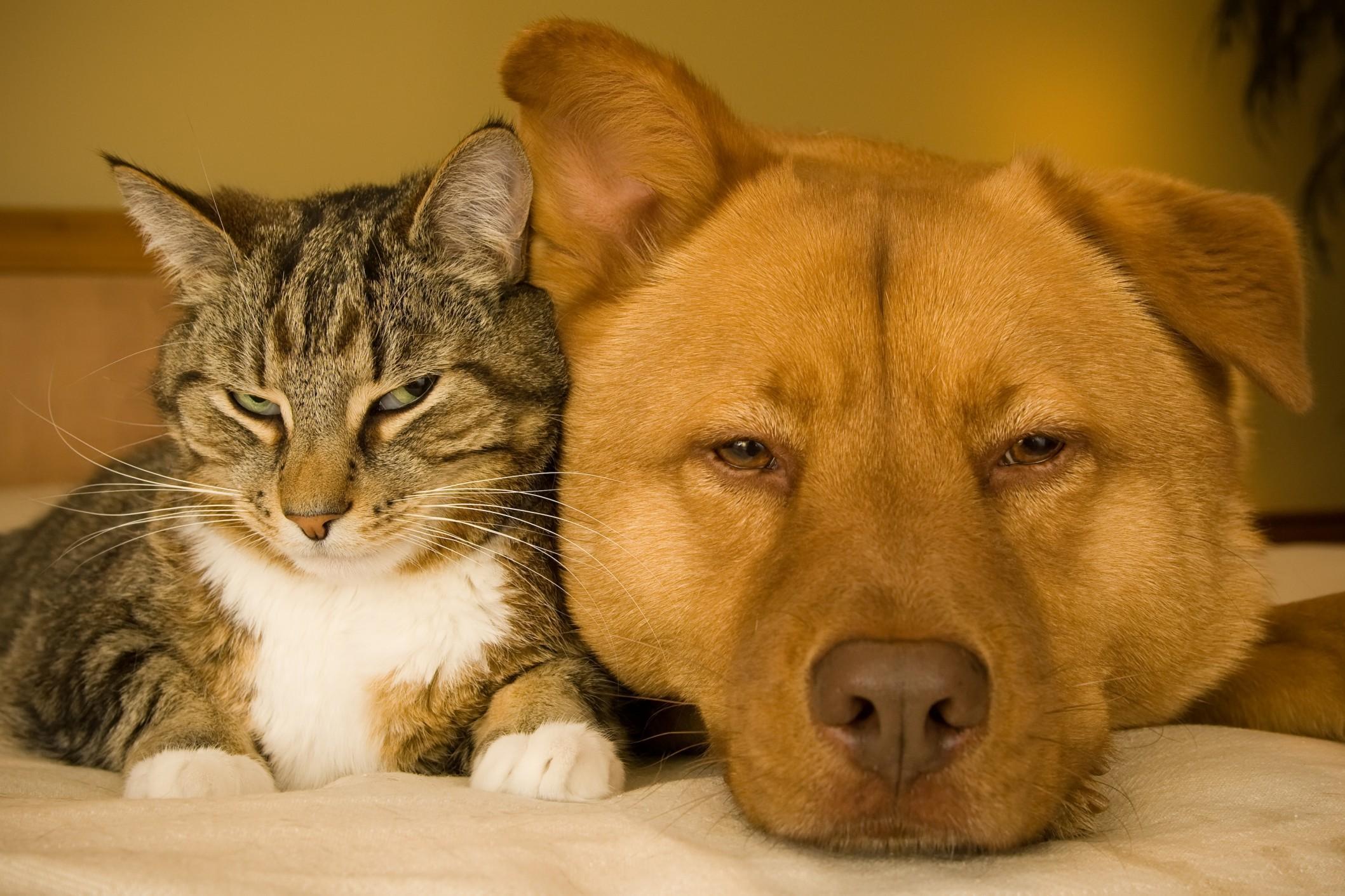 cane-e-gatto-1