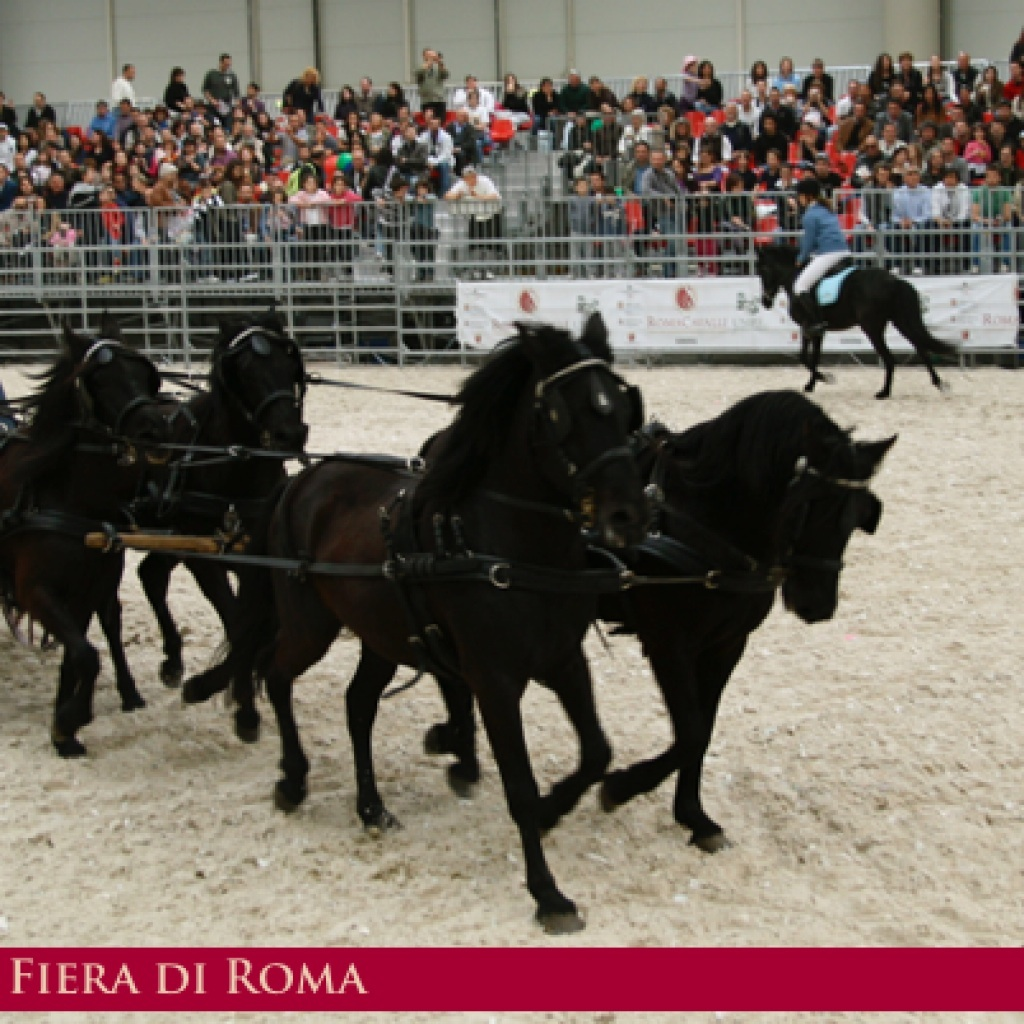 cavalli-a-roma-1024x1024