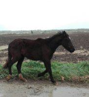 cavalli4