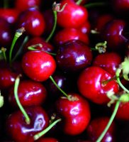 chiosco frutta 01