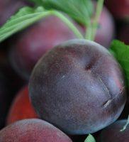 chiosco frutta 03