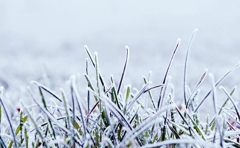 coltivazioni ghiaccio