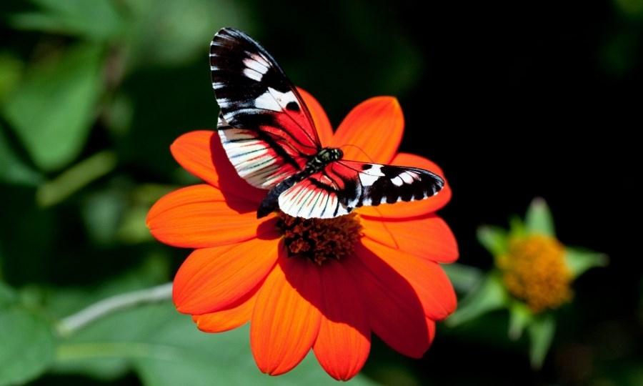 Gli animali di notte e il mondo delle farfalle