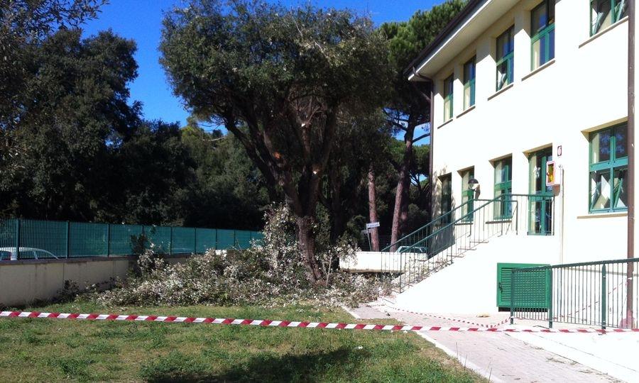 Scuola Fregene, alberi potati