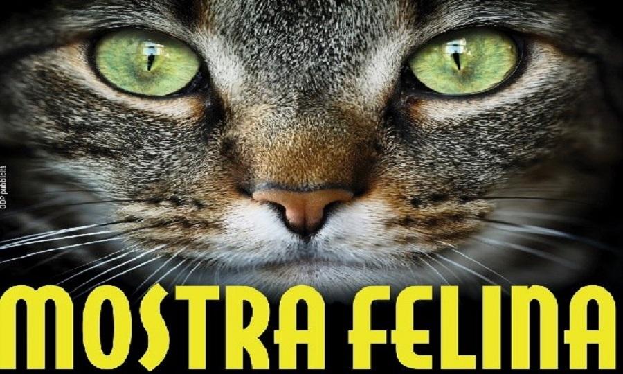 Super Cat Show, alla Fiera di Roma la mostra felina