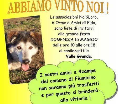 festa-canile-di-Valle-Grande-cani-gatti-maggio-trasferimento-Caserta-bando