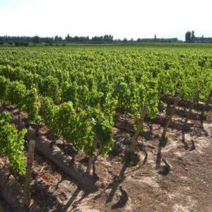 filari-vino
