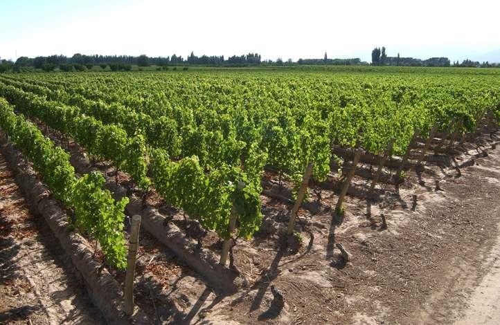 filari vino