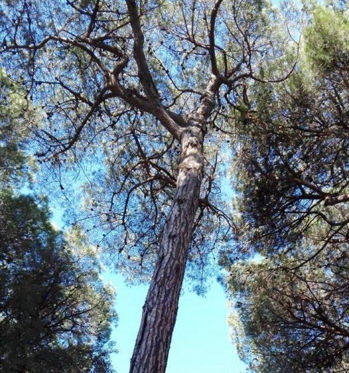 foto-alberi-1