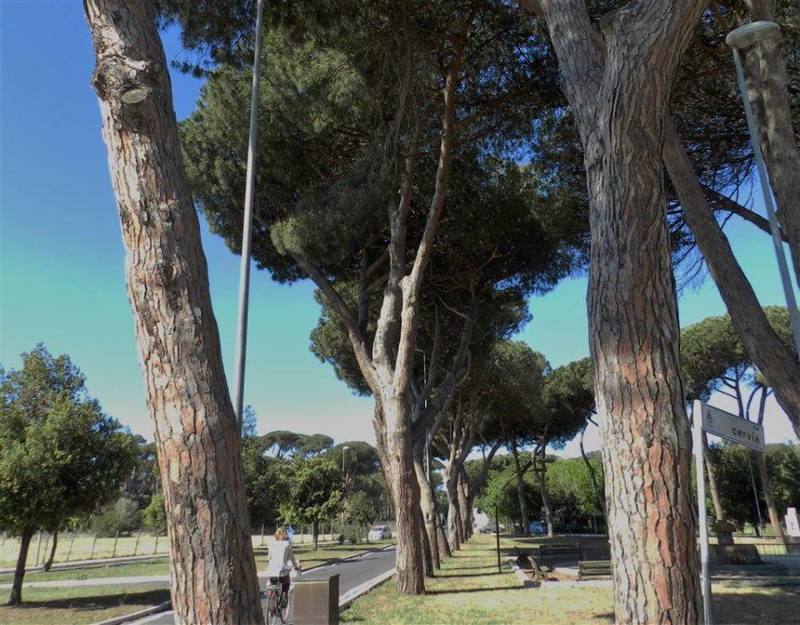 ramo fontana (960 x 750)