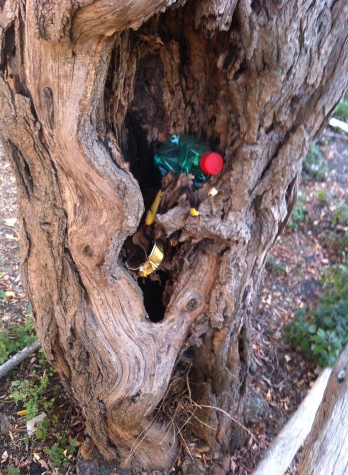 rifiuti albero