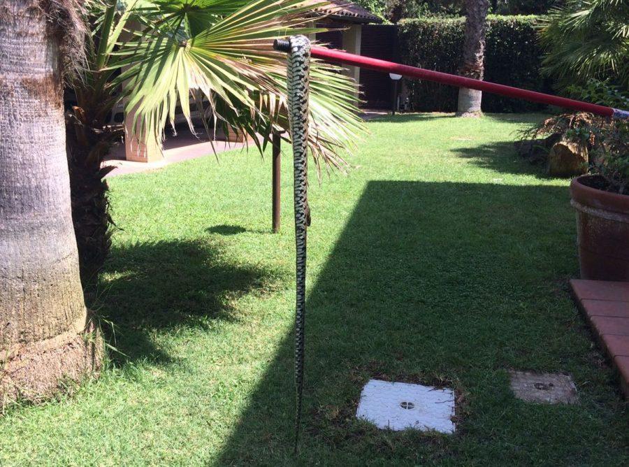 serpente casa 1