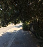 Cespugli viale Castellammare via Rapallo 1