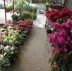 Flora e Fauna (7)
